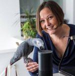 Afrikaanse papegaai doen aanlyninkopies in Londen